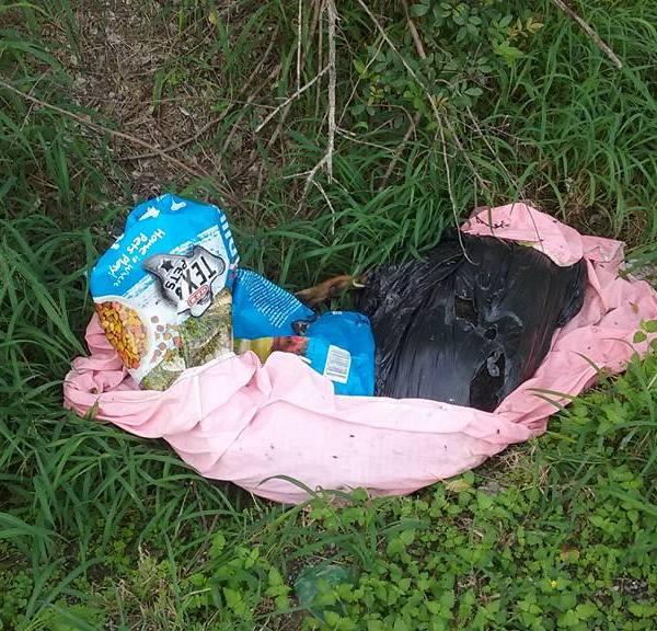 dog in trash 7_1481054908640.jpg