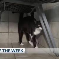 Pet_of_the_Week__Sally_6_20181217235625